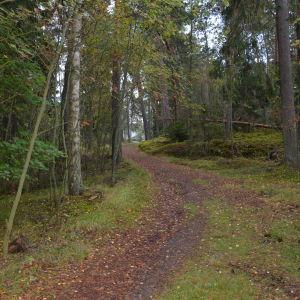 Skogsvägen till Villa Kolkka är smal eftersom den användes av hästvagnar.