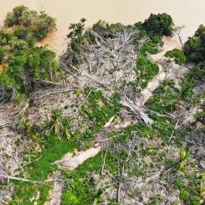 Ilmakuva laittomasti hakatusta alueesta Jamanxim-joen varrella Brasiliassa.
