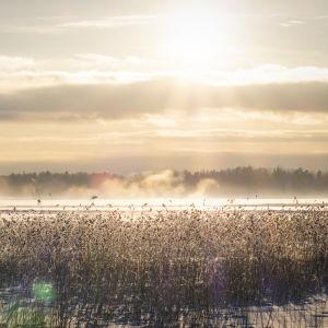 Talvinen maisema meren jäältä.