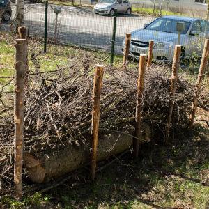 Aidantolppien väliin on kasattu puita, oksia ja risuja
