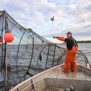 Kalastaja Mikael Lindholm hakemassa kalasaalista rysästä.
