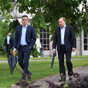 Pedro Sanchez ja Stefan Löfven kävelevät rinnakkain sateenvarjot käsissään.