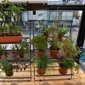 en massa växter på en hylla i en inglasad balkong