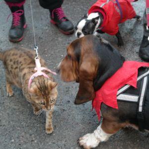 Katt och två hundar nosar på varann