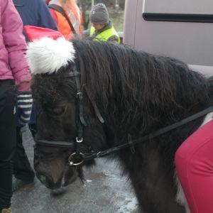 En ponny är med vid julfreden