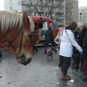 En häst deltar i djurens julfred