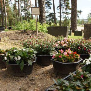 gravgård med blommor som skall bli planterade