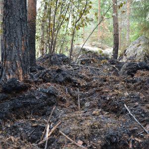 Brända träd och mark