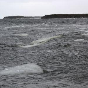 Vågor på havet.