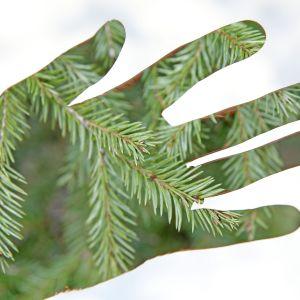 Utsträckt handflata med grafisk bild av granris
