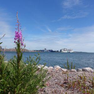 Utsikt över Finska viken från Drumsö strand. Passagerarfärjor i fjärran.