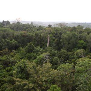 Amazonin sademetsää yläkulmasta kuvattuna