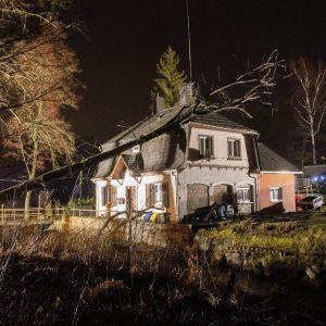 En dramatisk bild med ett hus det fallit ett träd på.