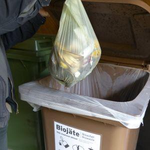 Biojätepussi menossa biojäteastiaan.