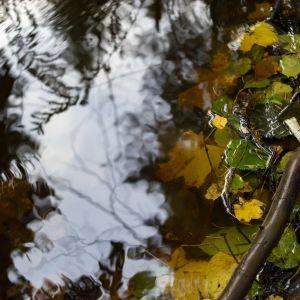 Gulnade höstlöv i en vattenpöl