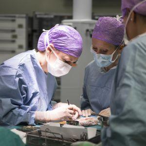 Kolme terveydenhuollon ammattilaista suorittaa leikkausta.