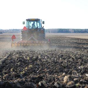 Traktori muokkaa peltoa