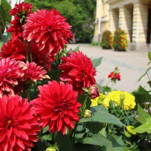 Vaasan kaupungin kukkaloistoa