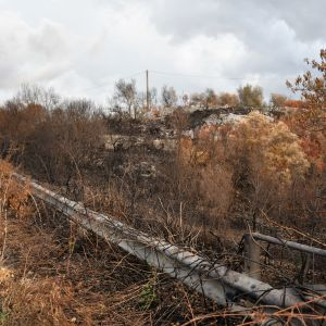 Brandhärjade buskar, träd och växter vid en väg på Sicilien.