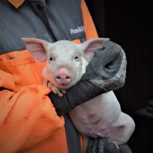 En tio dagar gammal griskulting i Anne-Maj Blomqvists famn.