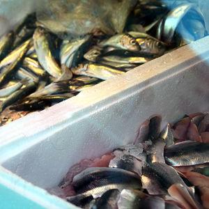 fisk i lådor