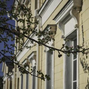 Keltainen kivitalo, valkoiset ikkunanpuitteet. Etualalla kirsikkapuun oksia.
