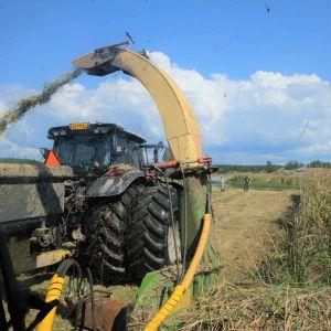 Reportern sitter i traktorn och fotar ur ut vindrutan. Man ser när vassen klipps framför oss.