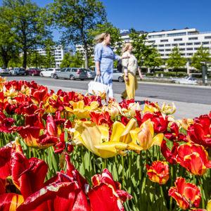 Röda och gula tulpaner, två kvinnor går i bakgrunden.
