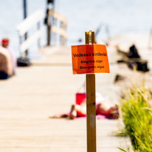 Etualalla kyltti jossa kerrotaan rannalaa olevan sinilevää, taustalla näkyy ihmisiä istumassa laiturilla.