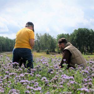 En kvinna och en man som står mitt i en äng och tittar närmare på blommorna och pollinerarna.