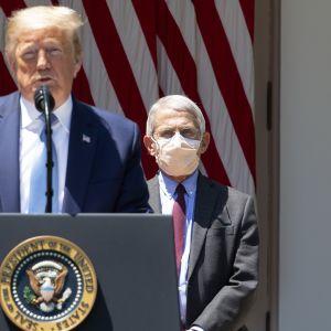 Vita husets rådgivare Anthony Fauci bär ansiktsskydd i motsats till sin chef Donald Trump.
