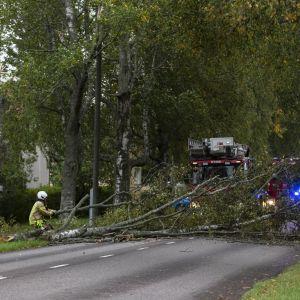 Palomies raivaa Aila-myrskyssä tielle kaatunutta puuta Kotkassa