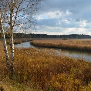 Havet vid Lovisa en hösdag