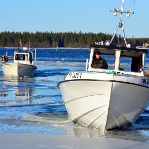 Fiskebåtar på väg genom isen