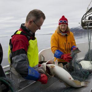Jørgen Hesten och Tom Nylund rensar näten på båten Sharken.