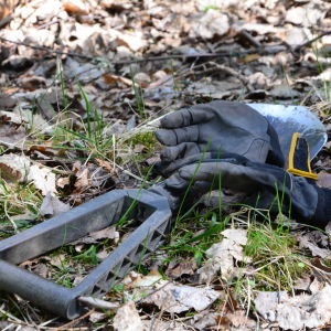 Handskaro ch fältspade i skogen