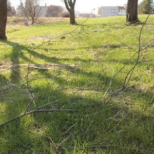 Fallna kvistar på gräsmatta