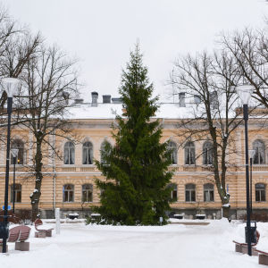 Julgran framför stadshuset i Borgå under vintern