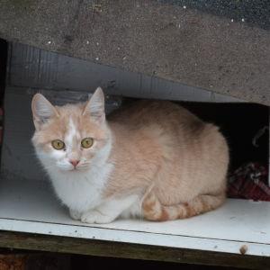 katt vid sitt krypin