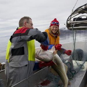 Tom Nylund reser till Lofoten för att uppleva den otroliga naturen och för att fiska.