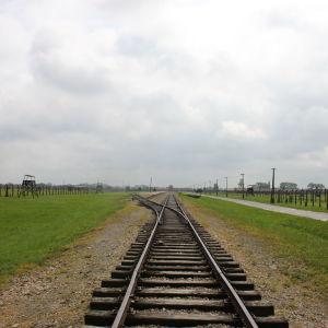 Tågräls i Auschwitz