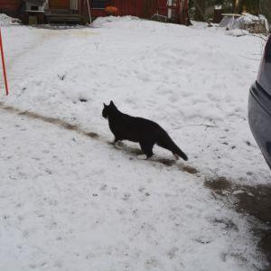 katt går längs sin stig