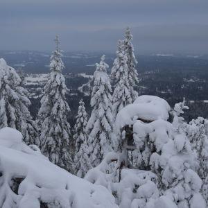 Massor av snö i Vuokatti i januari 2015