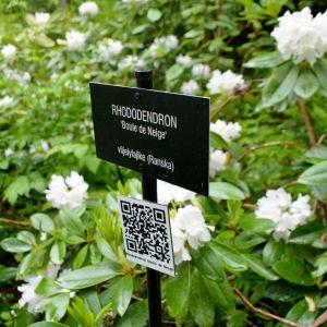Rhododendron och skylt.