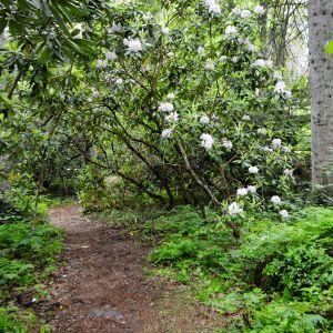 Arboretum Mustila i Elimä.