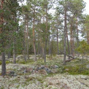 Här planerar Larsmo vindkraft Ab att bygga det ena av de två vindkraftverk som skall byggas mellan Holm och Gertruds