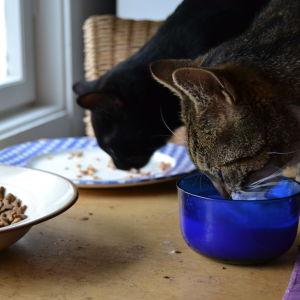 Päjzi och Nilz smaskar på äter.