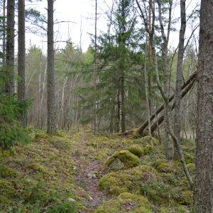 Helt åt skogen i Pomponrahka