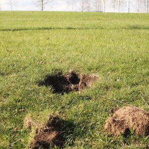Hål i gräsmatta