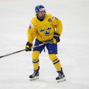Alexander Nylander är ett svenskt ishockeylöfte.